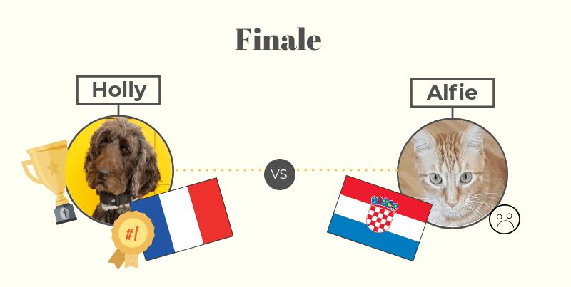 Hollorakel Finale